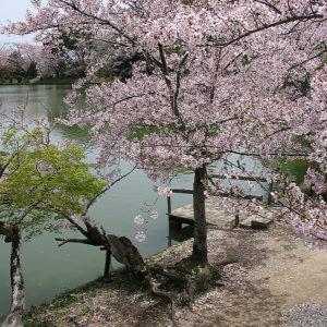 Asie, Japon, Arashiyama, Osawa No Ike, Souvenirs de Voyages, Pixanne Photographies