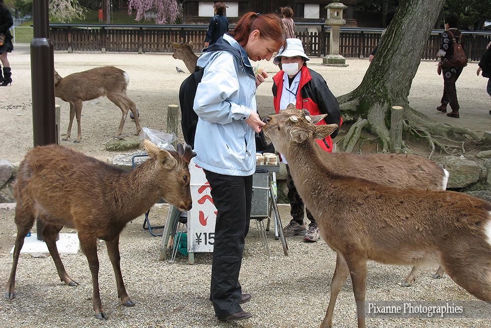 Asie, Japon, Nara, Daims, Souvenirs de Voyages, Pixanne Photographies
