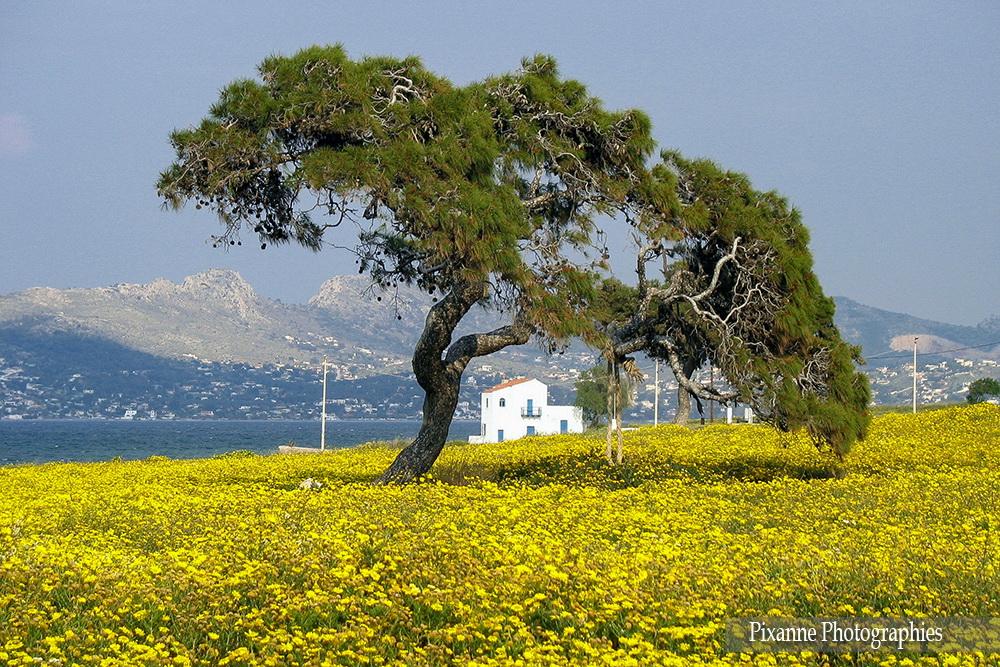 Europe, Grèce, Salamina, Souvenirs de Voyages, Pixanne Photographies