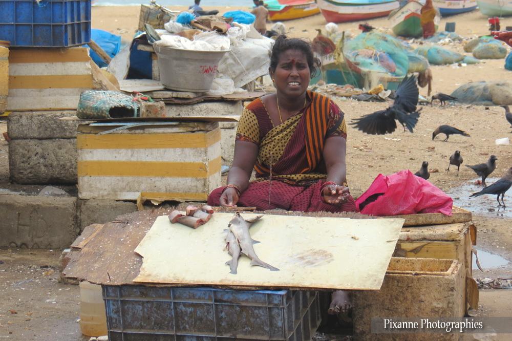 Asie, Inde du Sud, Tamil Nadu, Chennai, Marché aux poissons, Souvenirs de Voyages, Pixanne Photographies