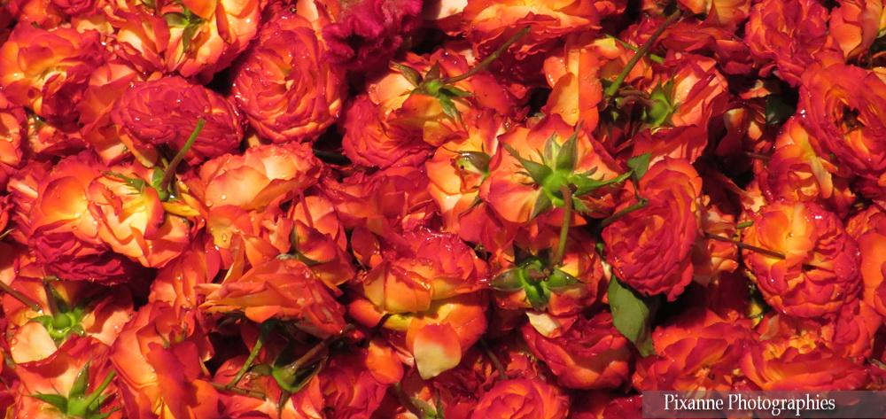 Asie, Inde du Sud, Tamil Nadu, Chennai, Kamarajar Market, Marché aux fleurs, Souvenirs de Voyages, Pixanne Photographies