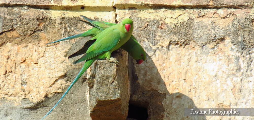 Inde du Sud_3959