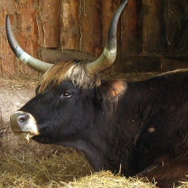 Parc Animalier de Sainte Croix * Animaux d'antan et autres