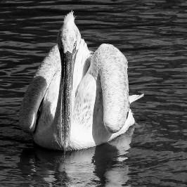 Parc animalier de Sainte Croix * Autour du lac