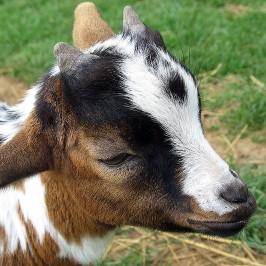 Parc animalier de Sainte Croix * Les animaux de la ferme