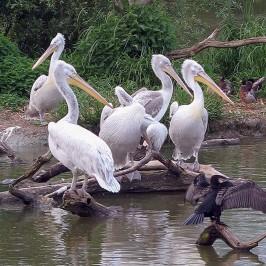 Parc animalier de Sainte Croix à Rhodes