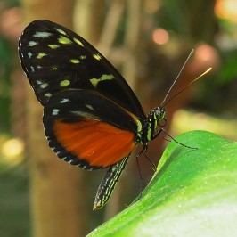 Hunawihr * Les Jardins des Papillons