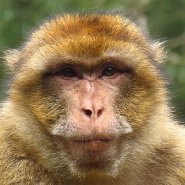 La Montagne des singes * Kintzheim