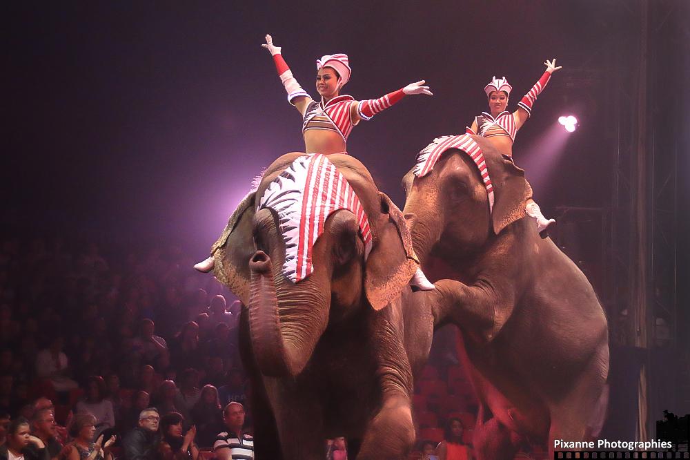 Cirque Arlette Gruss 2014_0011