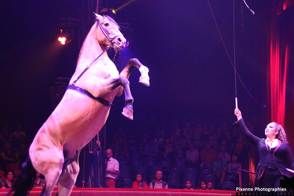 Cirque Arlette Gruss 2015_014