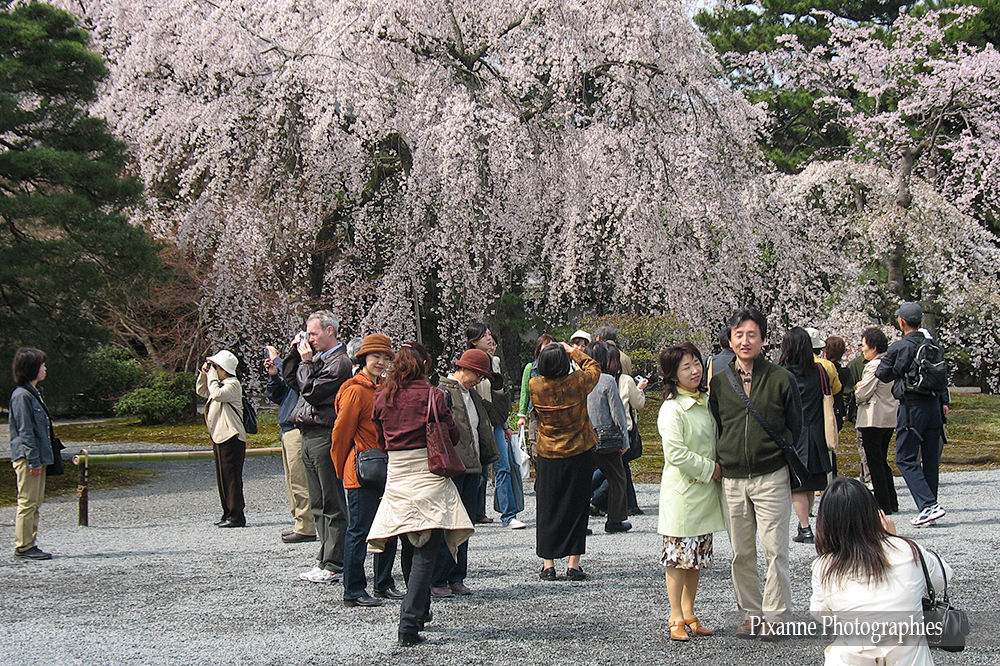 Asie, Japon, Kyoyo, Gosho, Palais Impérial, Souvenirs de Voyages, Pixanne Photographies