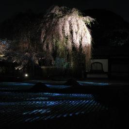 Asie, Japon, Kyoto, Kodai Ji, Souvenirs de Voyages, Pixanne Photograhies