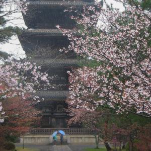 Asie, Japon, Kyoto, Ninna Ji, Souvenirs de Voyages, Pixanne Photographies