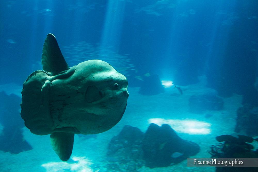 Europe, Portugal, Lisbonne, Parc des Nations, Oceanarium, Aquarium, Souvenirs de voyages, Pixanne Photographies