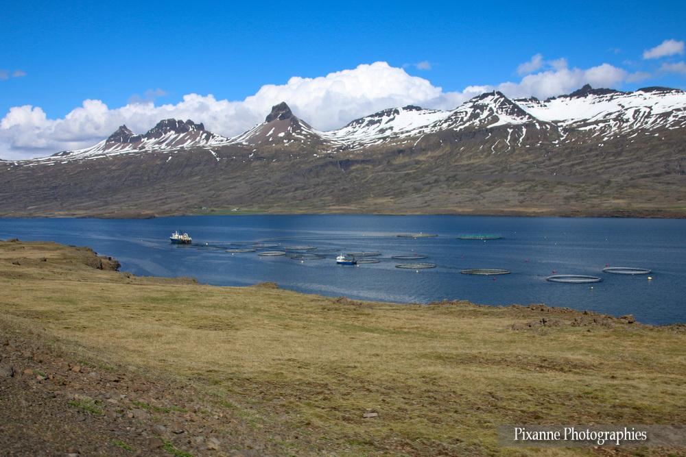 Europe, Islande, Austurland, Austfirðir, Fjord de l'Est, Berufjörður, Souvenirs de Voyages, Pixanne Photographies
