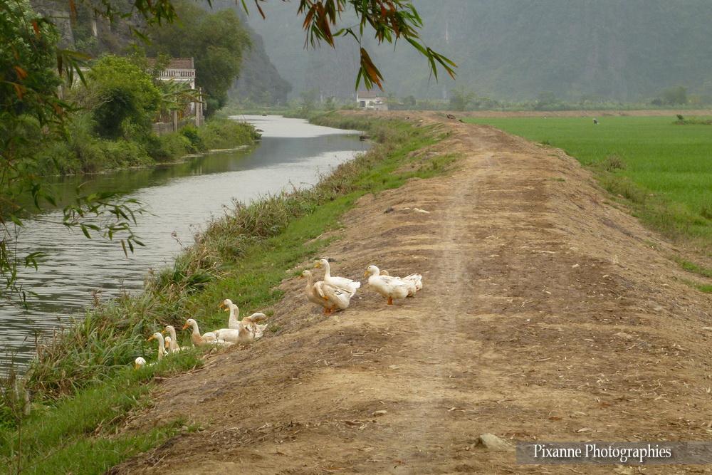 Asie, Vietnam, Baie D'Halong Terrestre, Tam Coc, Bich Dong, Souvenirs de Voyages, Pixanne Photographies